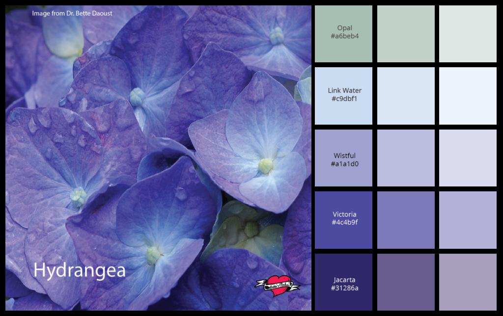 Color Palette Hydrangea
